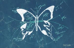 butterflyblueprint1