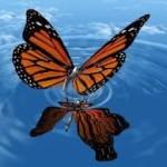 butterflyreborn