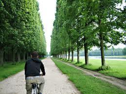 versailles bike