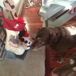 stockingdog