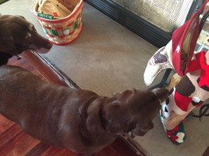 stockingdog2